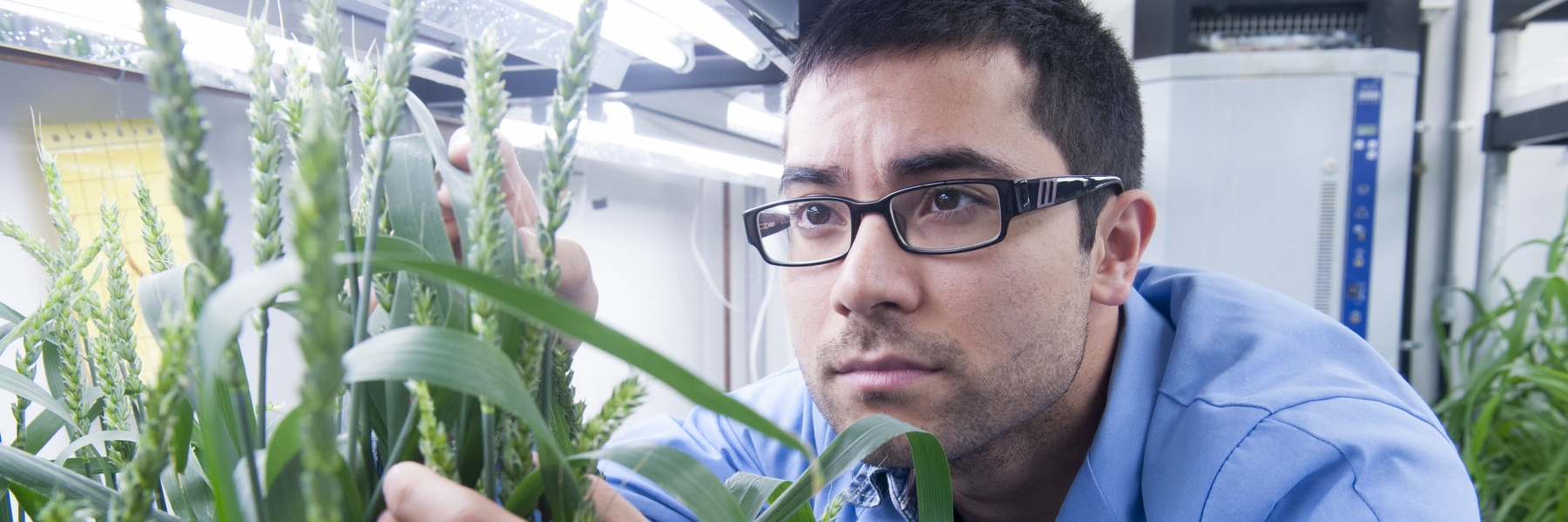 graduate student looking at a plant